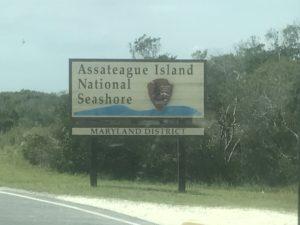 Assateague Island National Seashore, Maryland, 2017